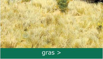 gras bestellen-bij-engelsmodelspoor-shop